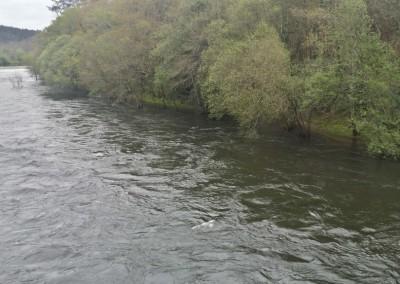 Coto de Ximonde, río Ulla