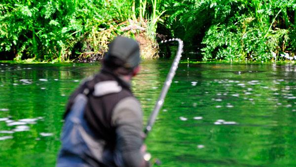 Capturas río Lérez