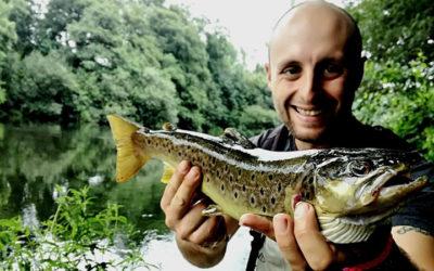Salmones sin precintar en el río Eo