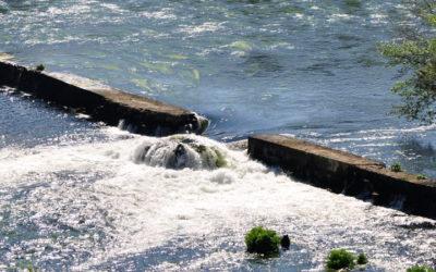 Solicitudes pesca fluvial Galicia temporada 2020
